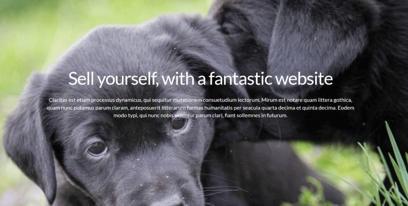 Tiny Pawz is dog caring website in uk